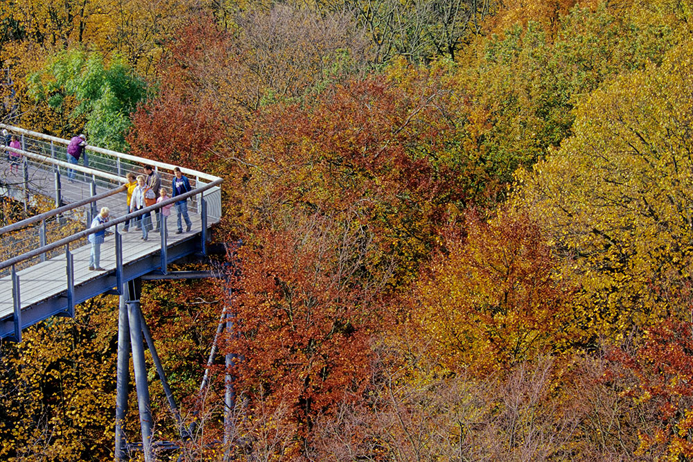 Image: Autumn colours on the Canopy Walk