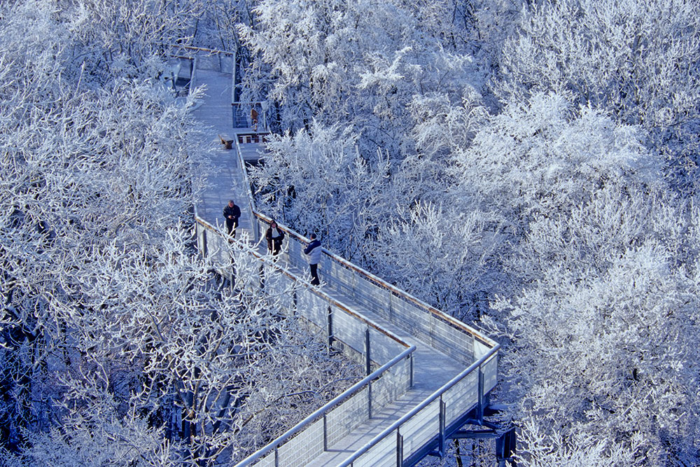 Image: The Canopy Walk in winter