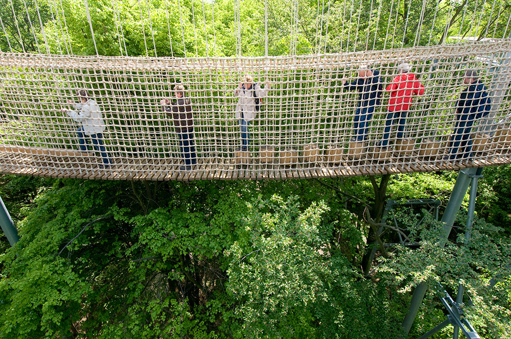 Image: Hanging bridge on the Canopy Walk