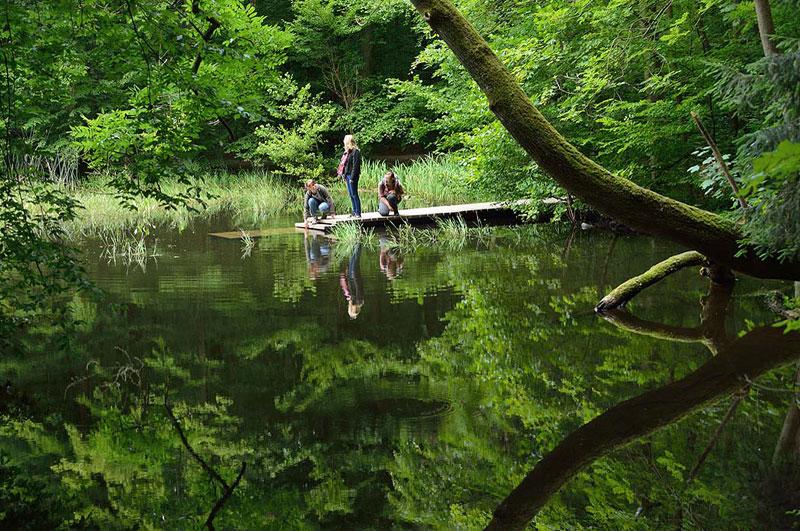 Foto: Der Hünenteich im Nationalpark Hainich