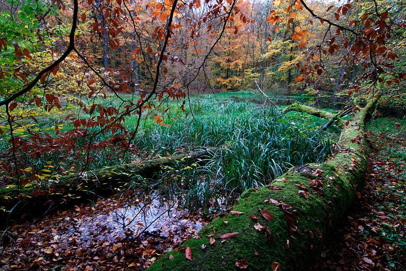 Foto: Der Hünenteich im Herbst