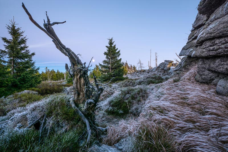 Foto: Nationalpark Harz