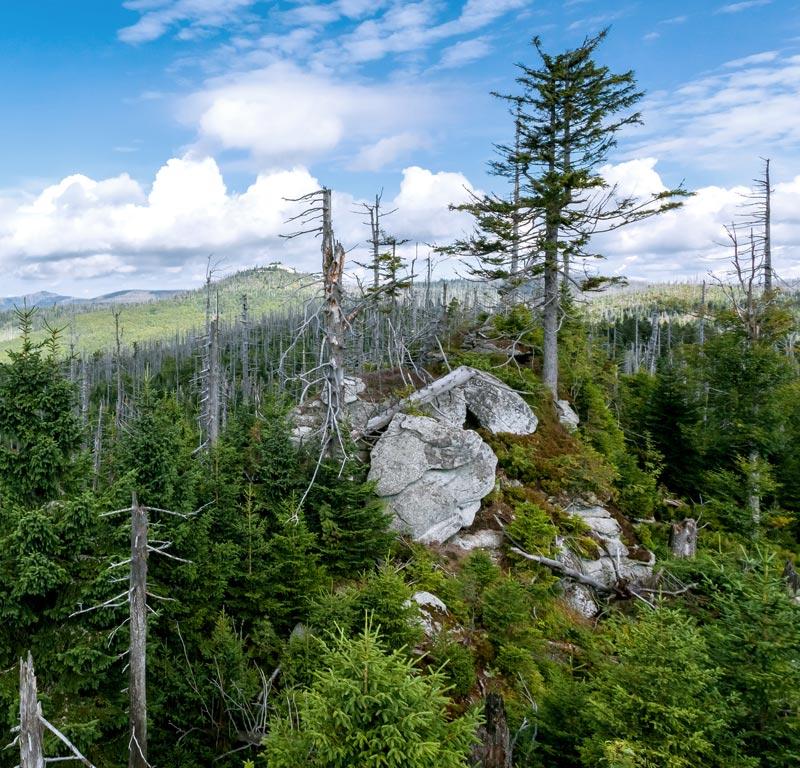 Foto: Nationalpark Bayerischer Wald