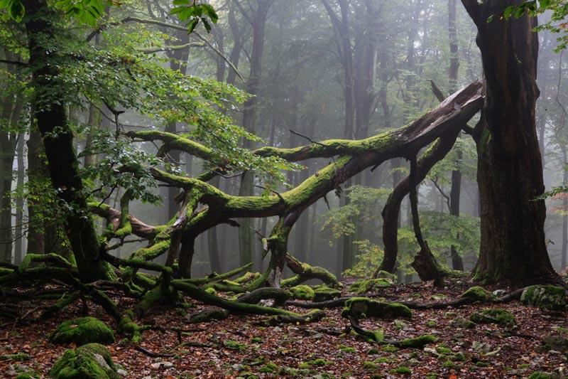 Foto: Nationalpark Hunsrück-Hochwald