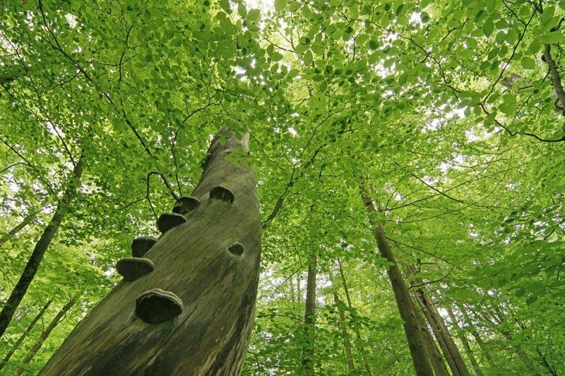 Foto: Nationalpark Hainich
