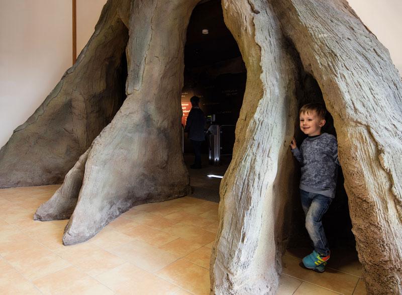 Foto: Die Wurzelhöhle im Nationalparkzentrum © Tino Sieland