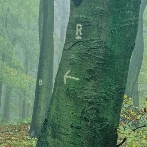 Foto: Markierung, Rennstieg im Nationalpark Hainich