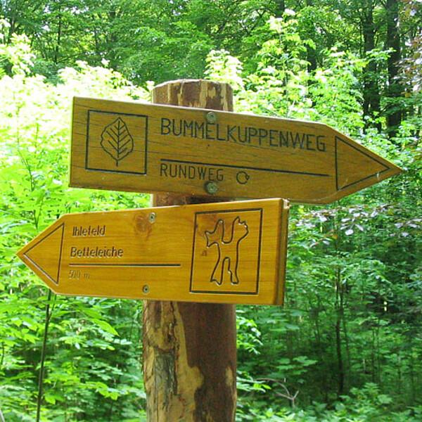 Foto: Wegweiser Bummelkuppenweg im Nationalpark Hainich