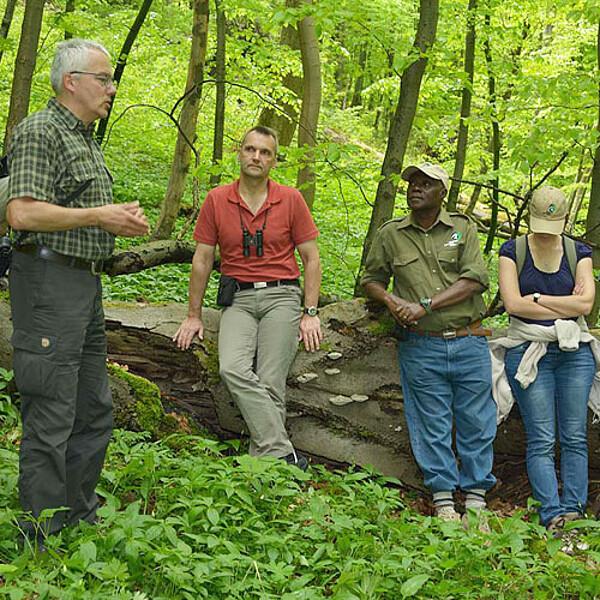 Foto: Führung im Nationalpark Hainich