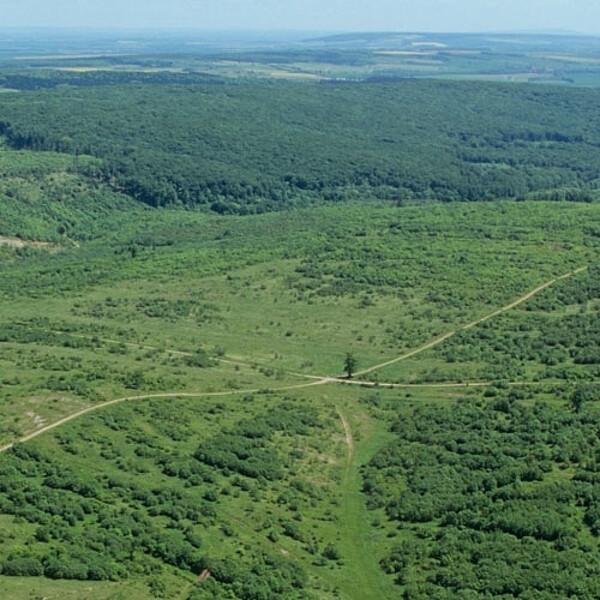 Foto: Luftaufnahme vom Nationalpark Hainich