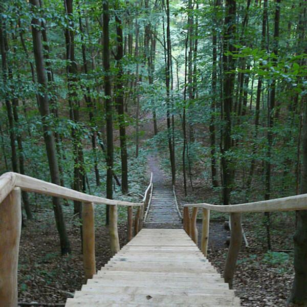 Foto: Der Wanderweg Sperbersgrund im Nationalpark Hainich