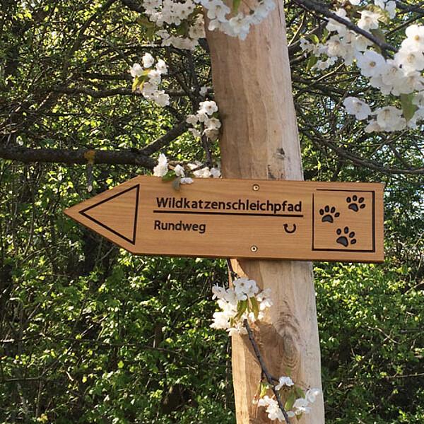 Foto: Wildkatzenschleichpfad im Nationalpark Hainich