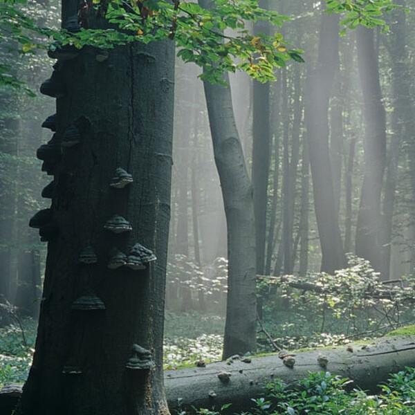 Foto: Der Saugrabenweg im Nationalpark Hainich