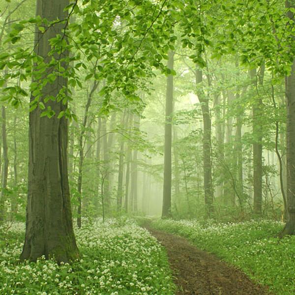 Foto: Hainichlandweg im Nationalpark Hainich