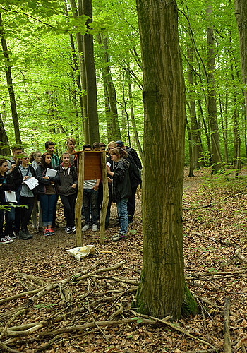 Image: Pupils in Hainich National Park