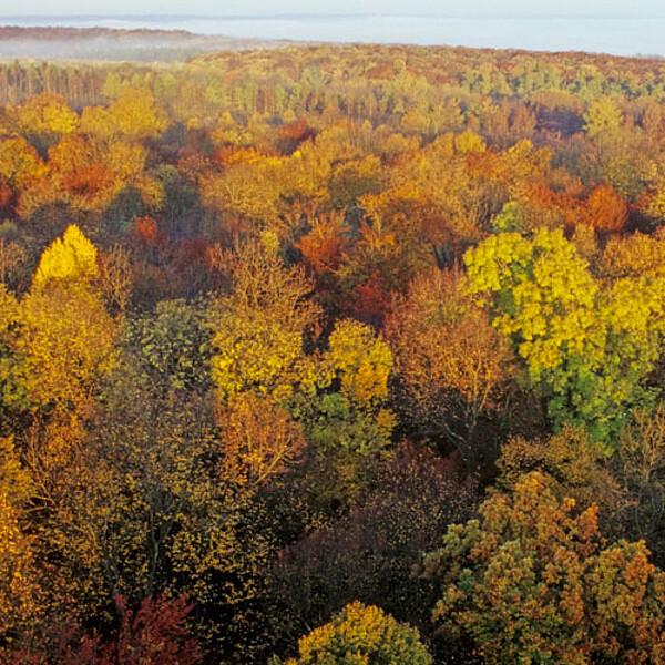 Foto: Herbst im Nationalpark Hainich