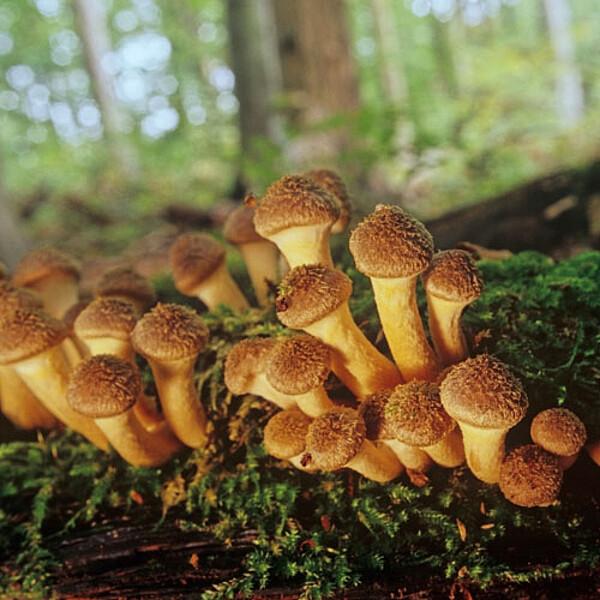 Foto: Pilze am Totholz im Nationalpark Hainich